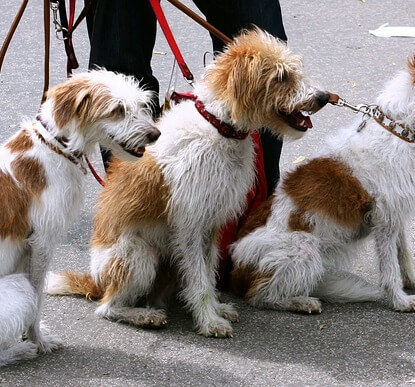 Jauntin - Dog Walking Insurance